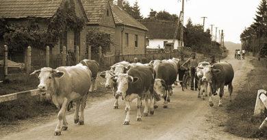 Szent György-napi hagyományok a faluban